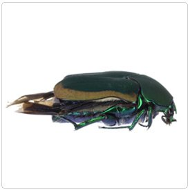 Insect: 360 product view